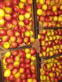 купить яблоки оптом