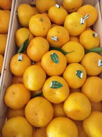 продажа мандарин оптом